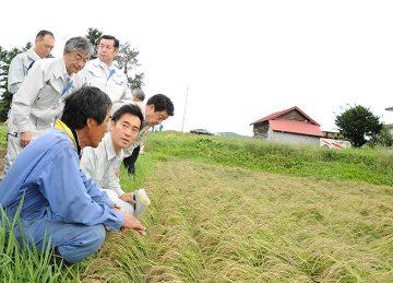 冠水した水田で、農家から話を聞く矢倉、稲津の両氏ら=8日 北海道深川市