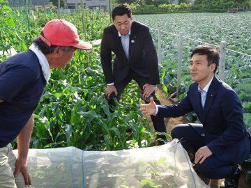 練馬へ都市農業視察